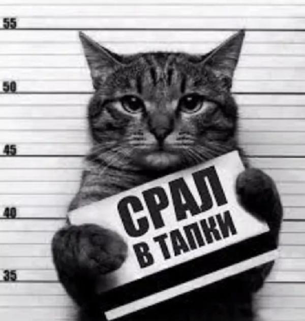 анекдоты про котов нема