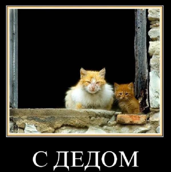ржачные анекдоты про котов нема