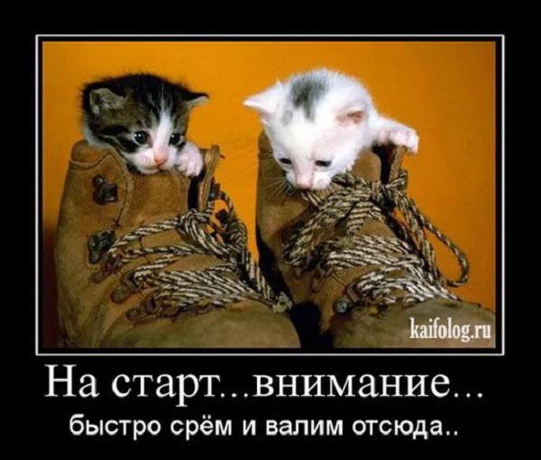 смешной анекдот про кошек нема