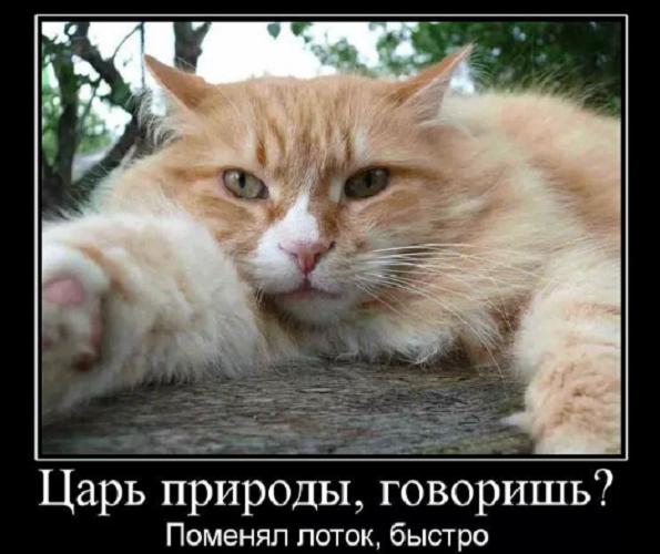 веселый анекдот о кошке нема